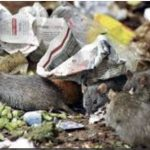 Spiritual Warfare is lke rats in garbage.